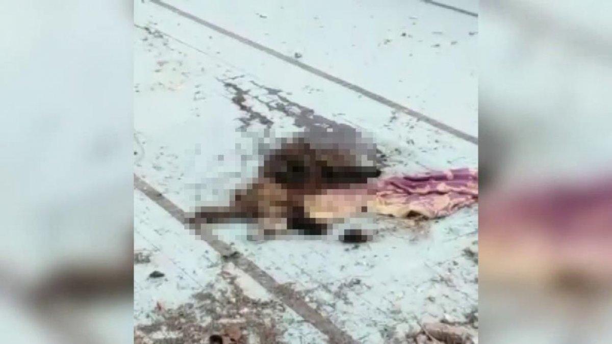 Adana da bir köpek bıçaklanarak öldürüldü #2