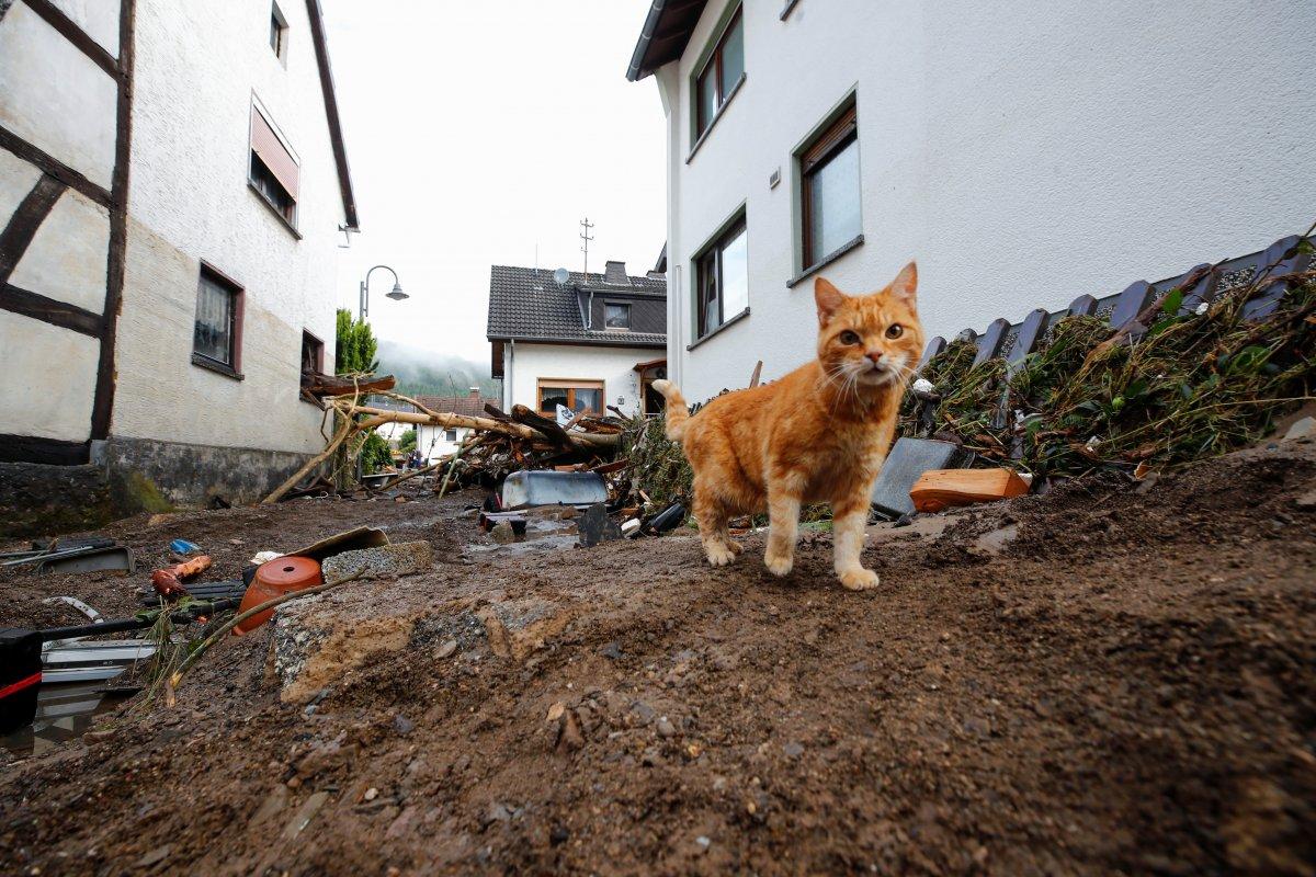 Almanya da sel felaketinin bilançosu #6