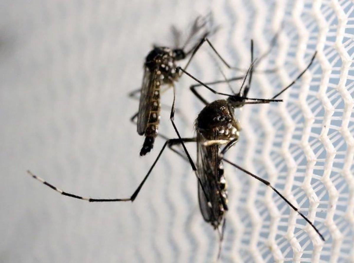 Asya Kaplan Sivrisineği, giysi üzerinden ısırabiliyor #3