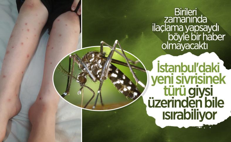 Asya Kaplan Sivrisineği, giysi üzerinden ısırabiliyor