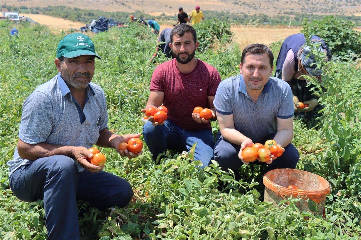 Kilisli domates talebine yetişemiyor #2