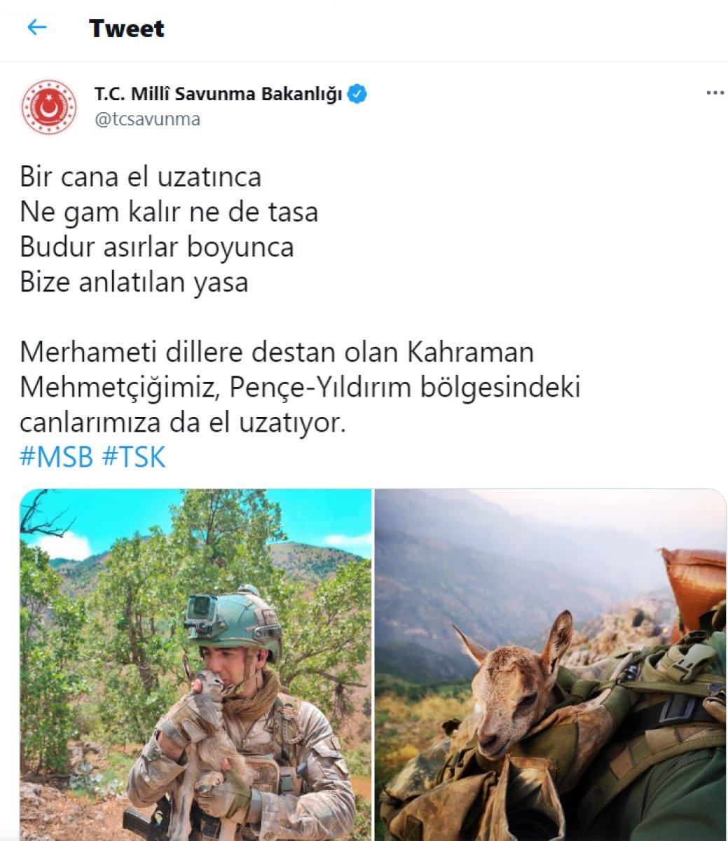Mehmetçik, görev yaptığı bölgedeki hayvanları unutmadı #1