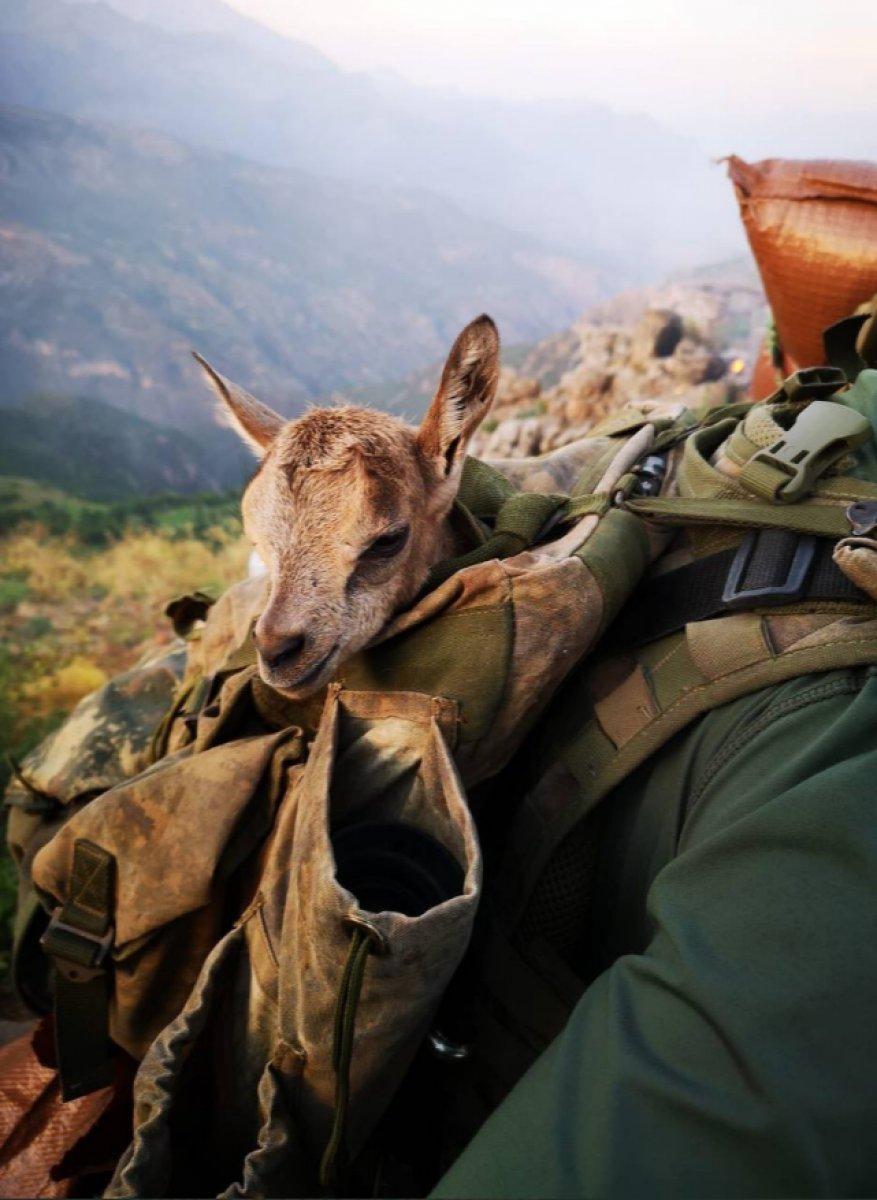Mehmetçik, görev yaptığı bölgedeki hayvanları unutmadı #3