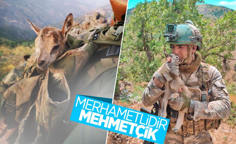 Mehmetçik, görev yaptığı bölgedeki hayvanları unutmadı