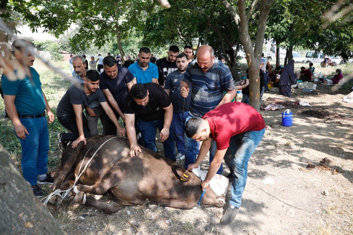İstanbul da uyarı afişinin altında kurban kestiler #3