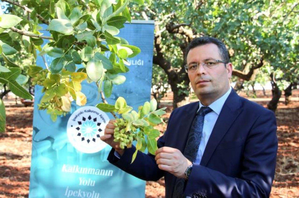 Mustafa Varank: Türkiye nin ilk lisanslı Antep fıstığı deposunu Gaziantep e kazandırdık #3