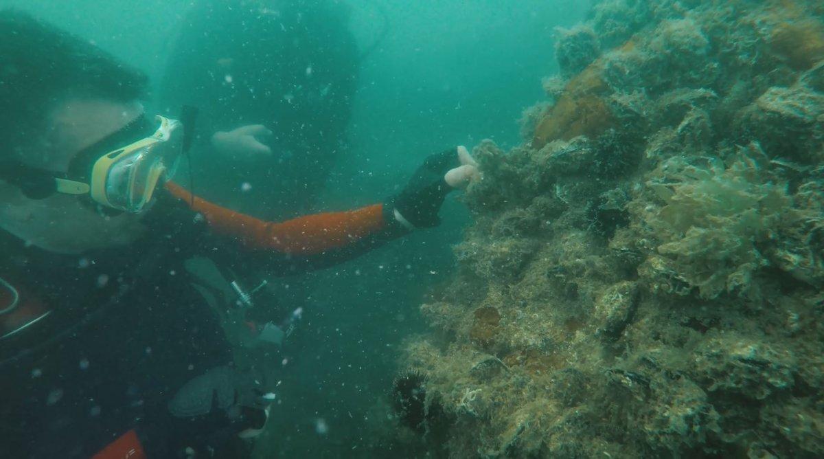 Bekir Pakdemirli, Marmara Denizi ne dalış yaparak hayalet ağ çıkardı #4