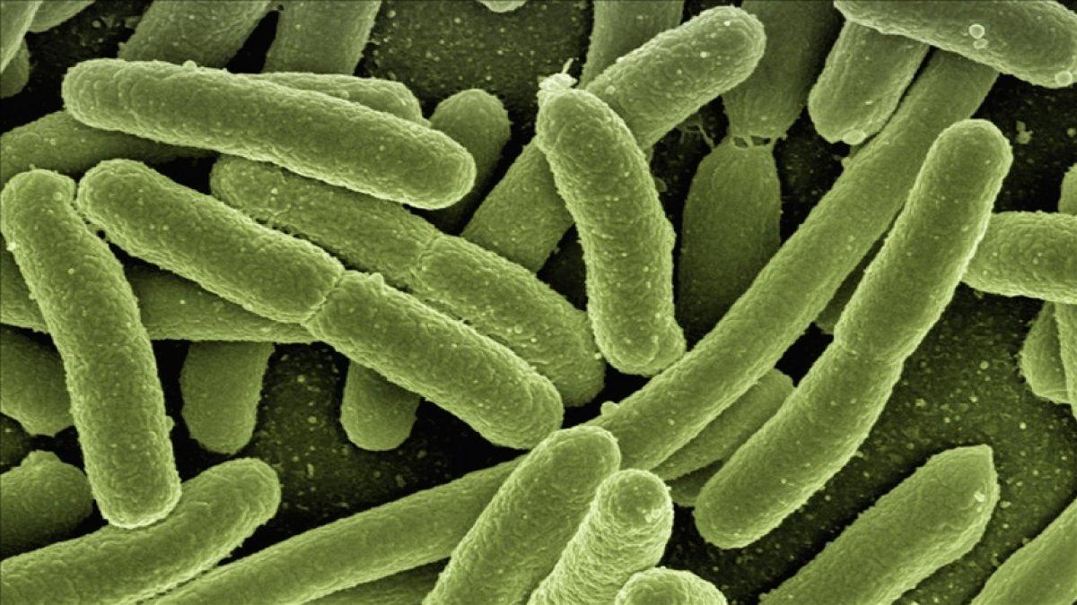 Binlerce yıllık buzulda 28 yeni virüs keşfedildi