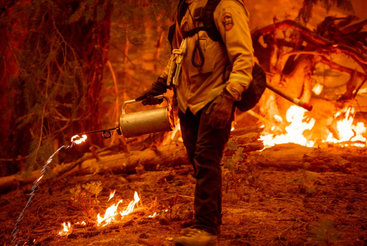 Kaliforniya da orman yangınıyla mücadele #6