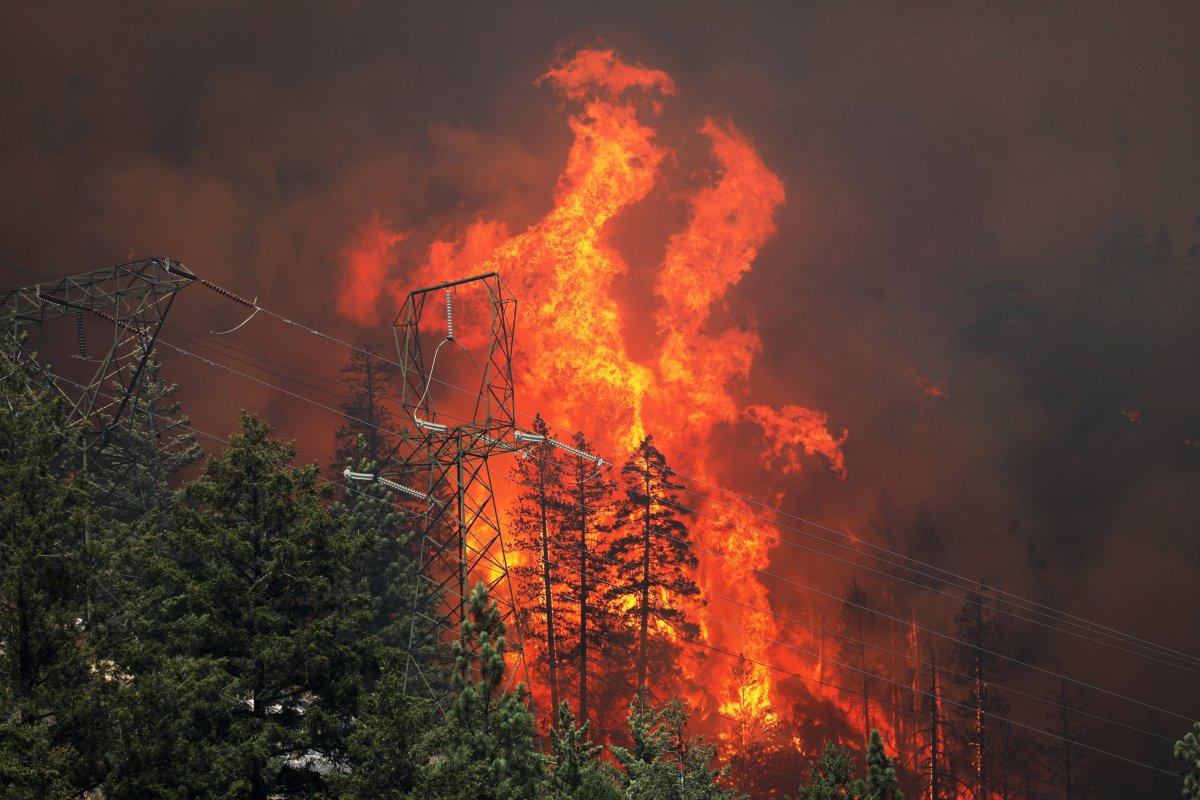 Kaliforniya da orman yangınıyla mücadele #4