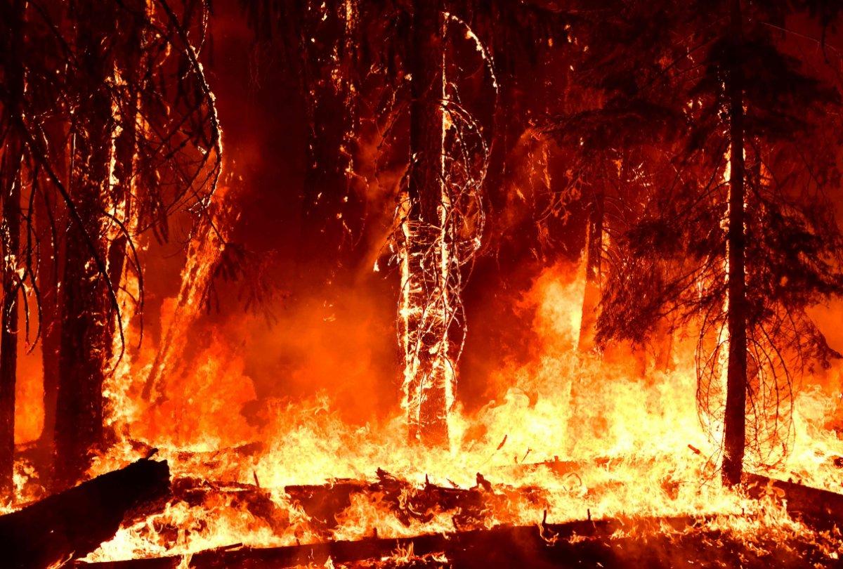 Kaliforniya da orman yangınıyla mücadele #5