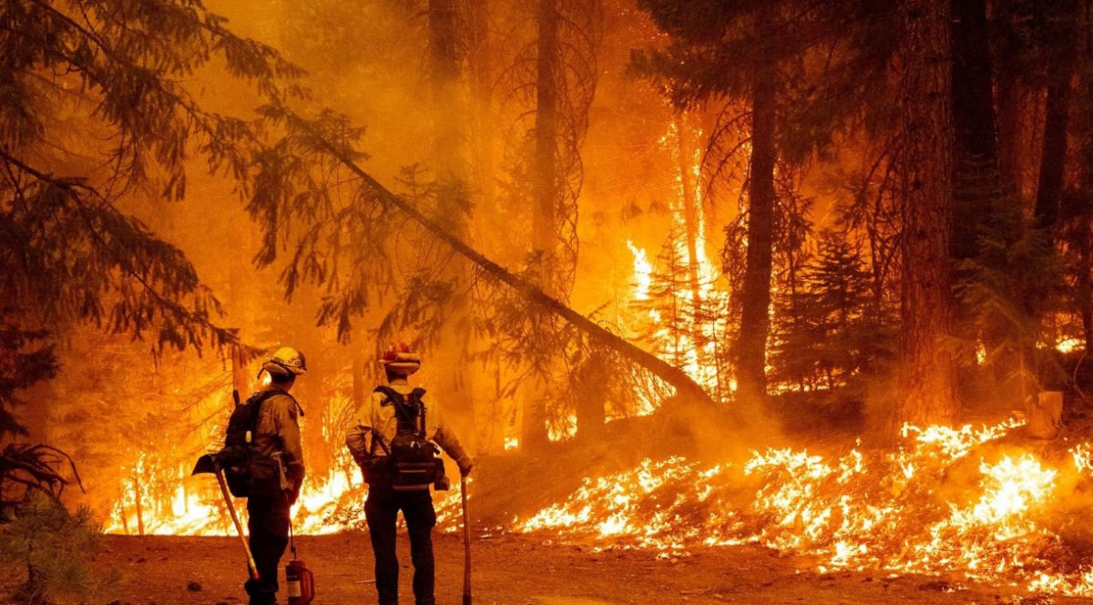 Kaliforniya da orman yangınıyla mücadele #10