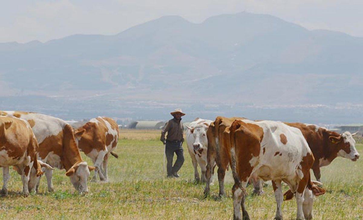 Erzurum da çoban sıkıntısı: 7 bin lirayı beğenmiyorlar #3