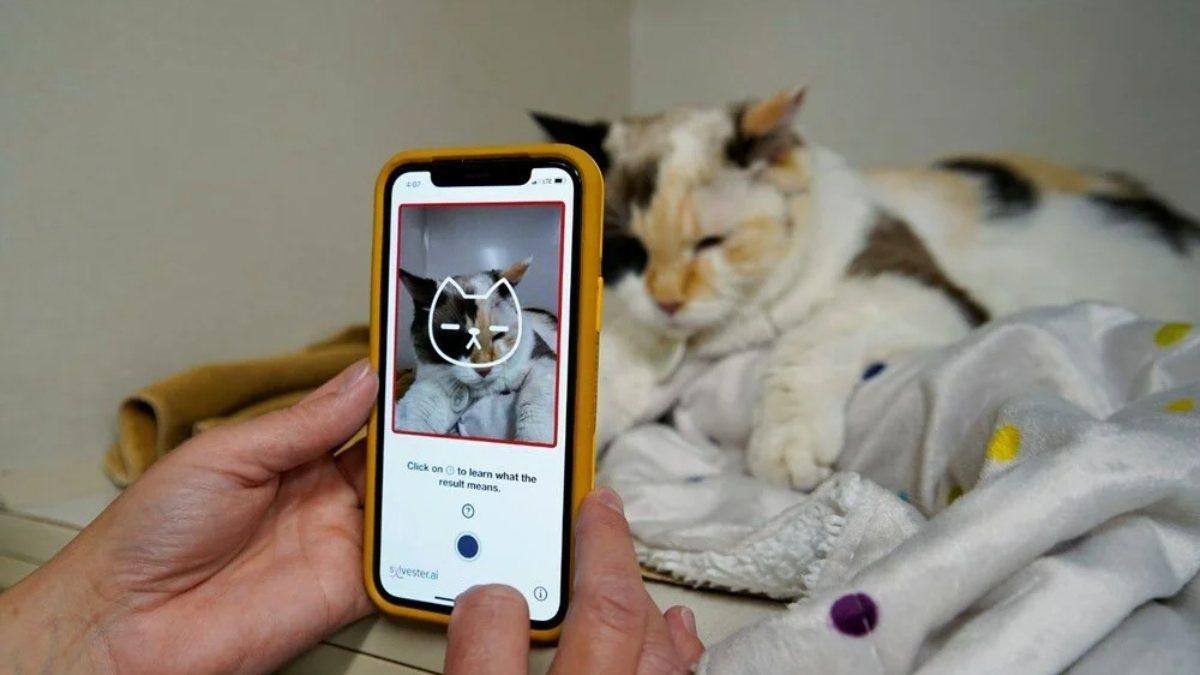 Tek bir fotoğraftan kedilerin sağlık durumunu gösteren uygulama
