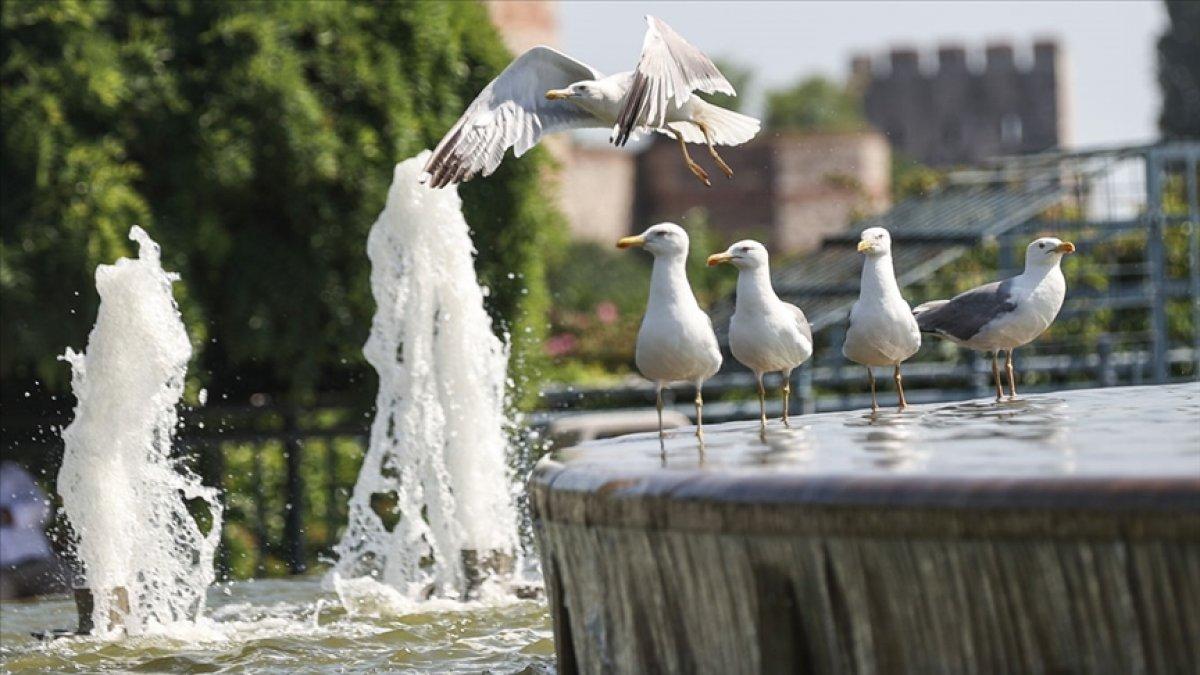 Türkiye eyyam-ı bahur sıcaklarının etkisi altına giriyor #1