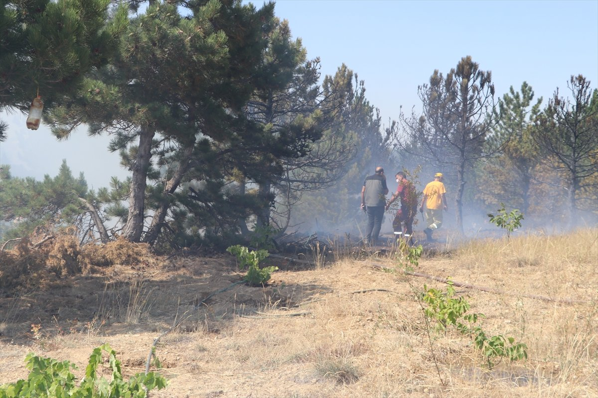 Karaman'da orman yangını #8