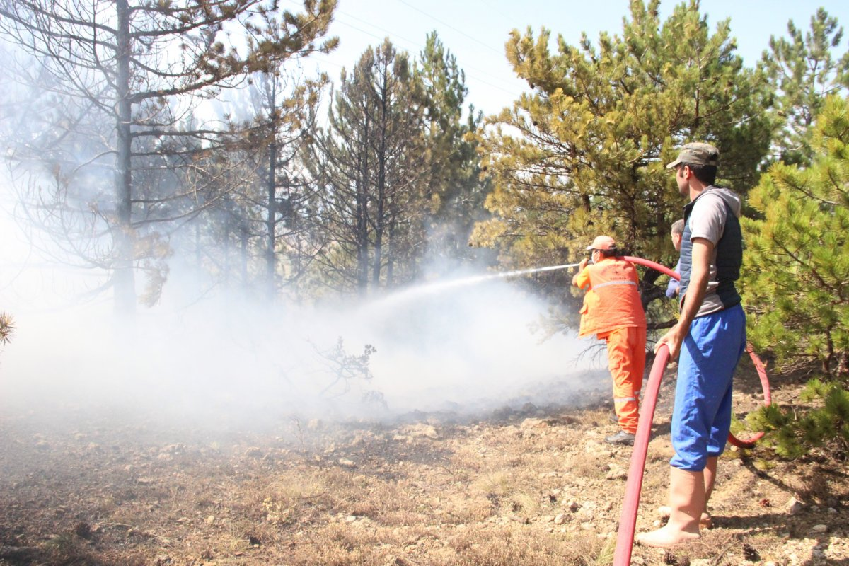 Karaman'da orman yangını #1