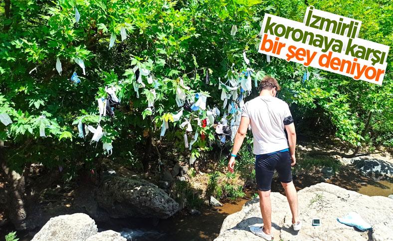 İzmir'de, vatandaşların çaput bağladığı dilek ağacına maske asılmaya başlandı
