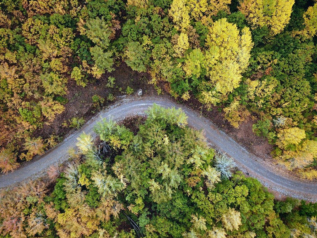 Tunceli de ormanlara giriş ve çıkışlar 1 ay yasaklandı #3