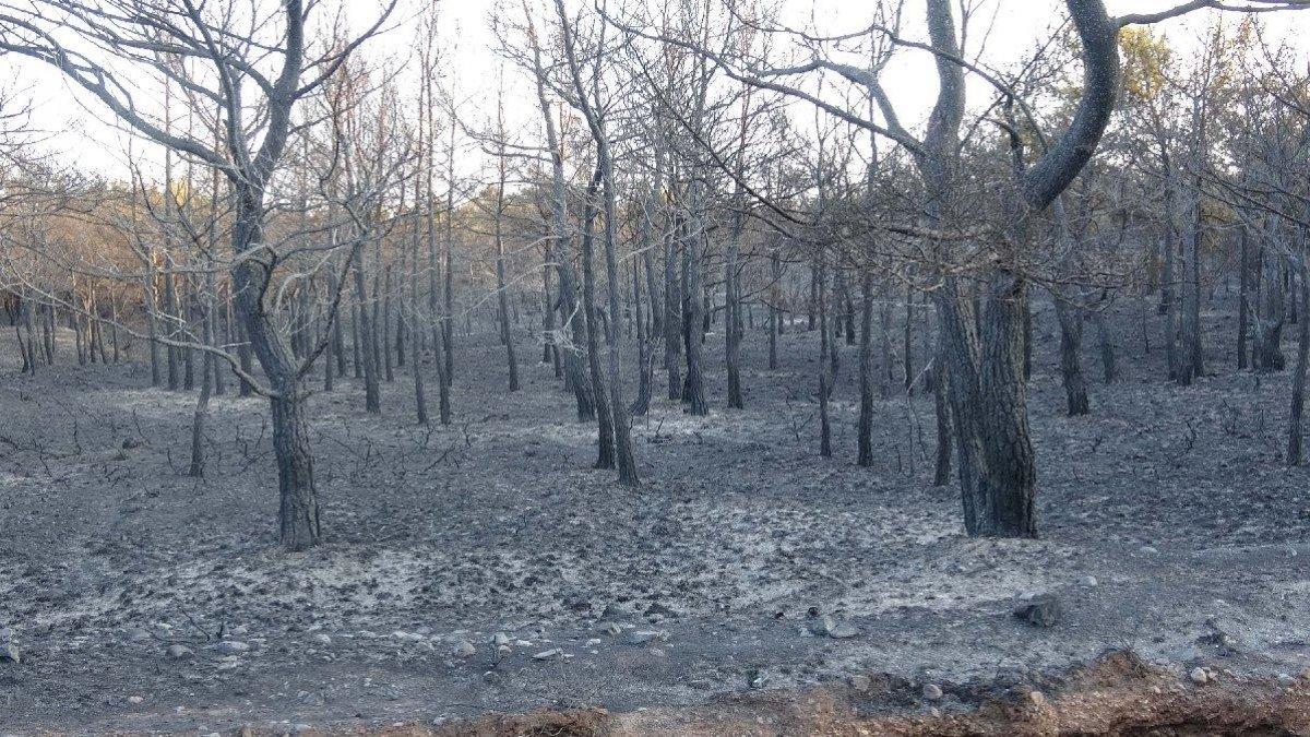 Muğla da 40 bin hektarlık alan yangından zarar gördü #2