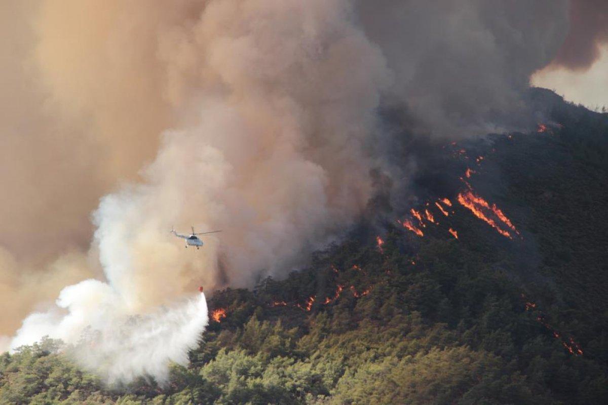 Muğla da 40 bin hektarlık alan yangından zarar gördü #1