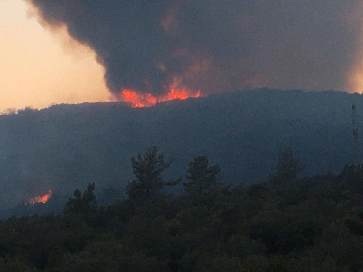 Muğla da 40 bin hektarlık alan yangından zarar gördü #7