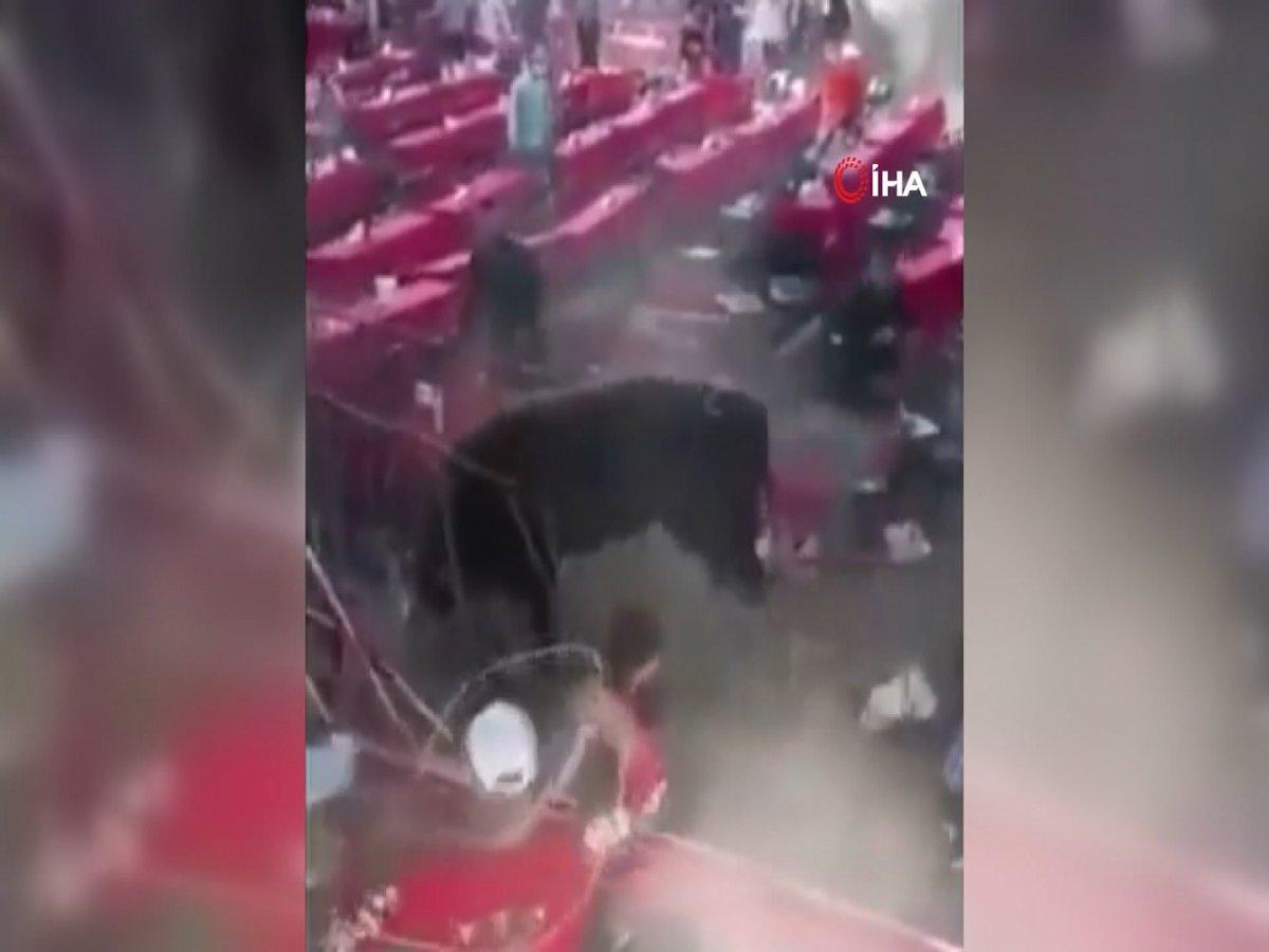 Meksika'da rodeo sırasında boğa seyircilere saldırdı #2