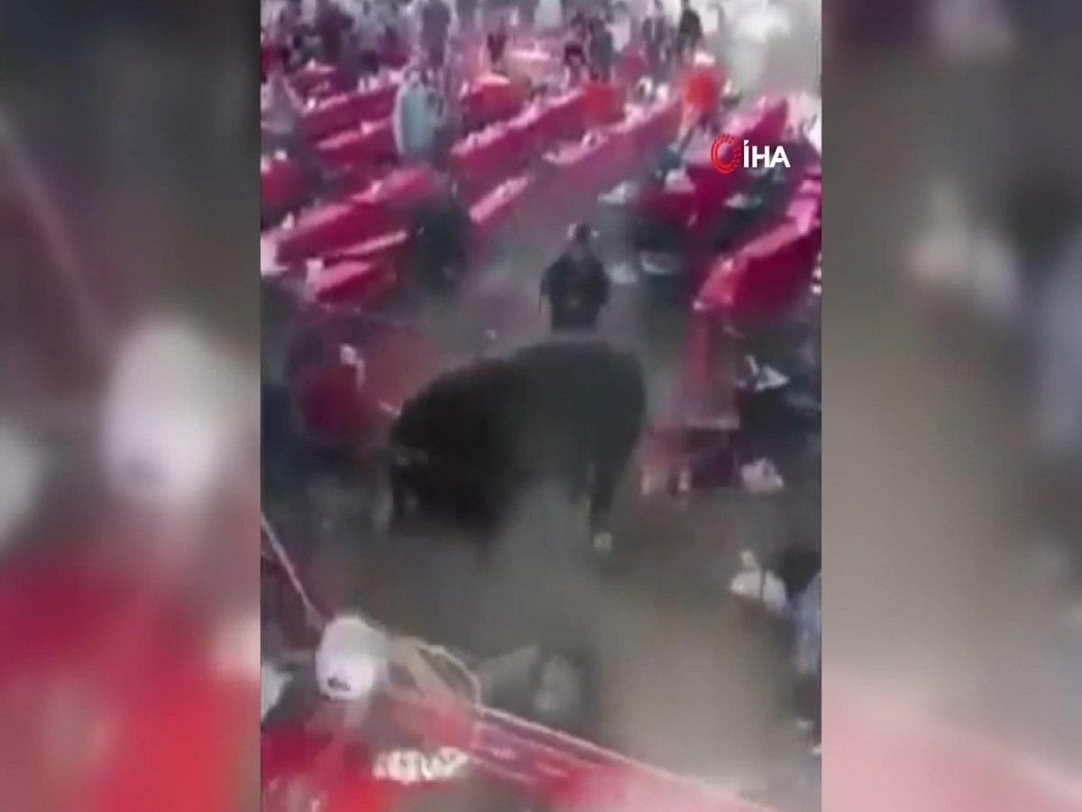 Meksika'da rodeo sırasında boğa seyircilere saldırdı #1