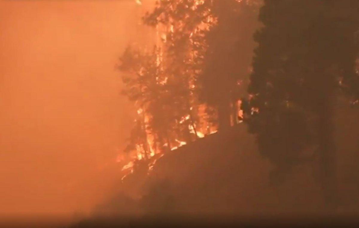 Kaliforniya da orman yangını yeniden büyümeye başladı #6