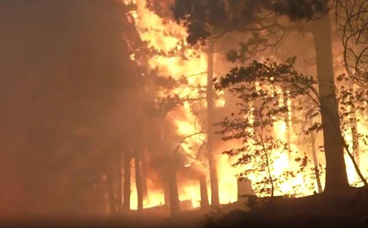 Kaliforniya da orman yangını yeniden büyümeye başladı #7