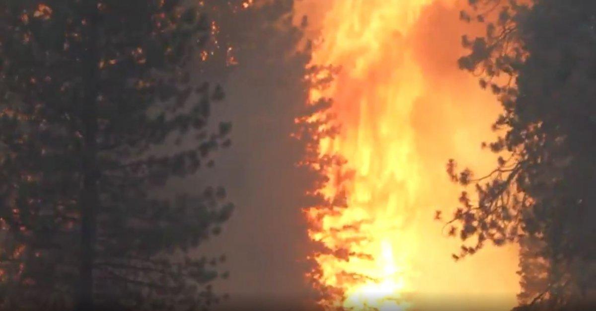 Kaliforniya da orman yangını yeniden büyümeye başladı #5