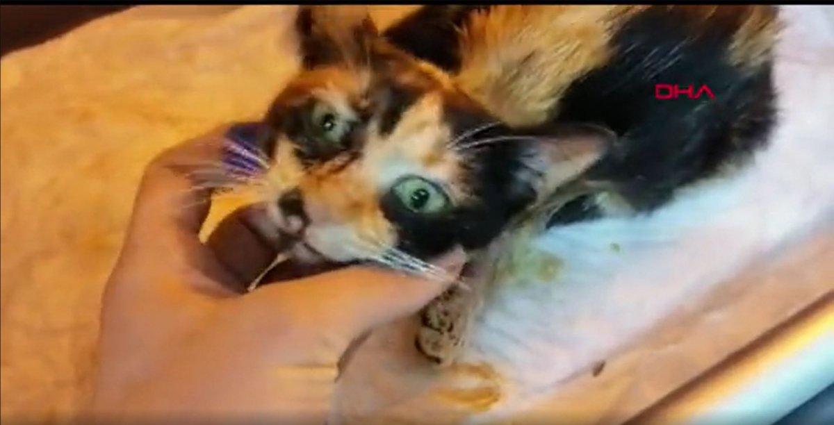 Esenler'de kedilerin bacağı ve kuyruğu kesildi  #1
