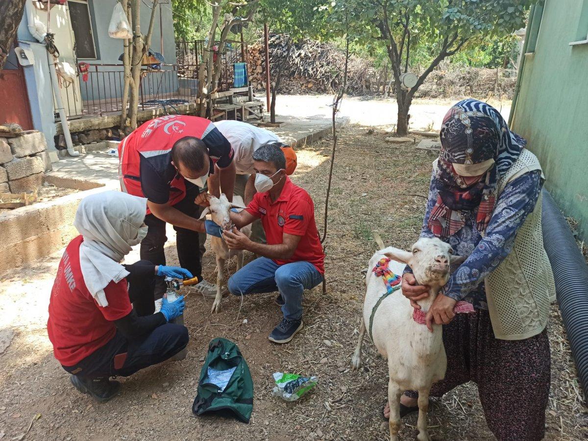 Yangından etkilenen keçilere UMKE ekipleri müdahale etti #1