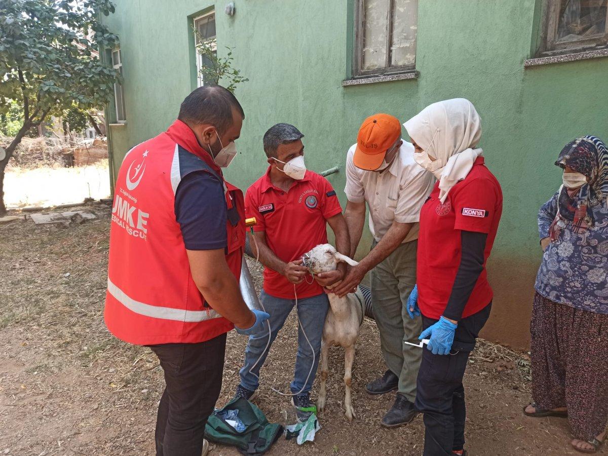Yangından etkilenen keçilere UMKE ekipleri müdahale etti #3