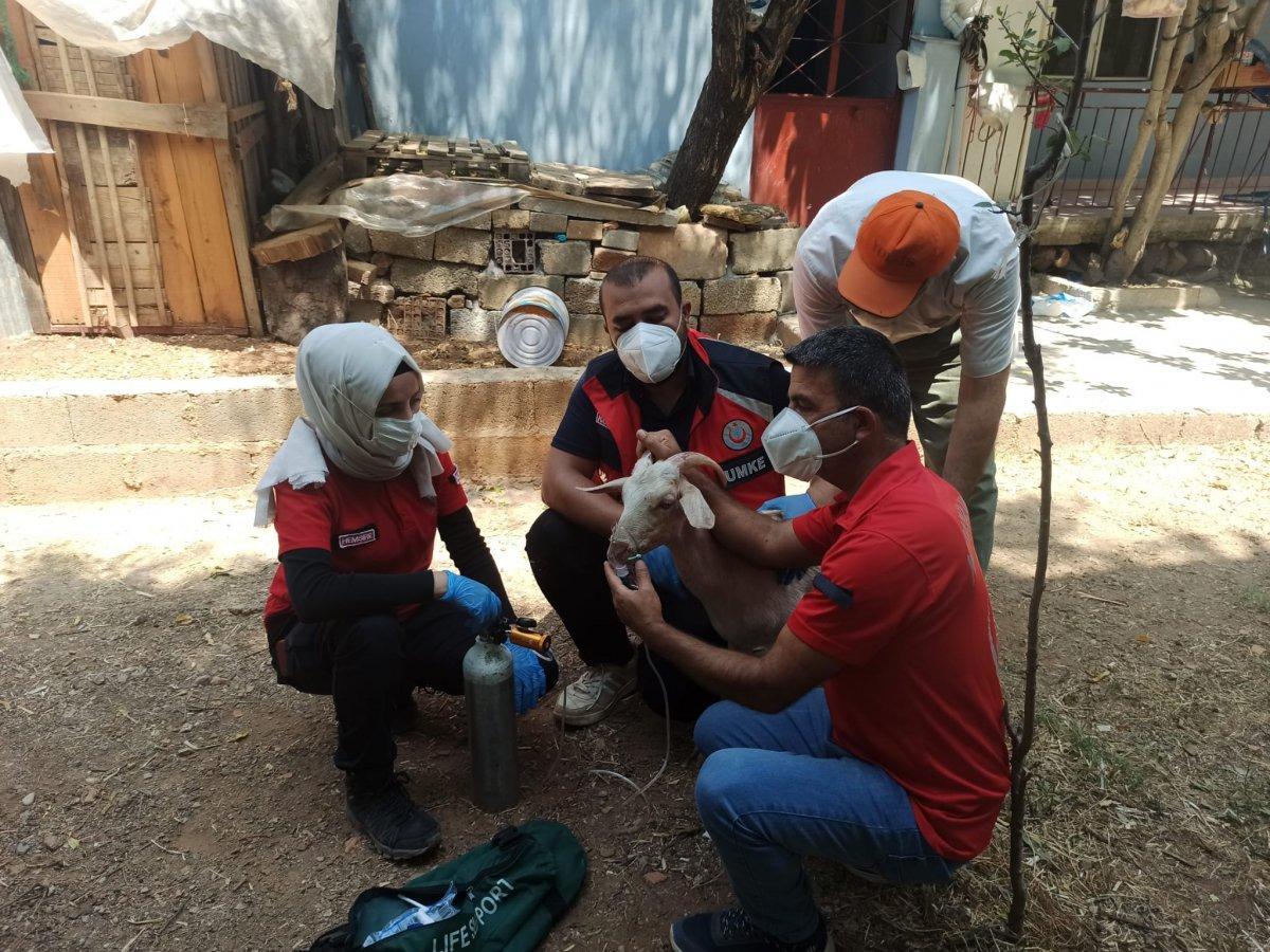 Yangından etkilenen keçilere UMKE ekipleri müdahale etti #2