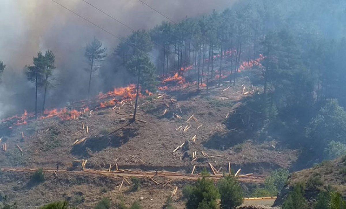 Orman yangınlarıyla tahrip olan bölgeler, 3 yöntemle ağaçlandırılacak #4