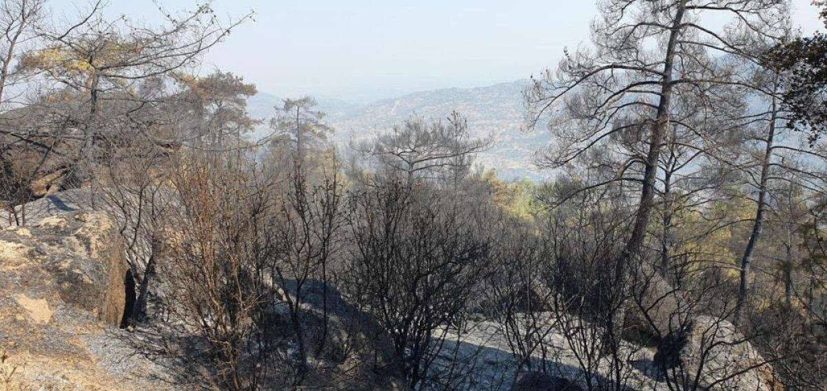 Çine de yanan alanlar görüntülendi  #4