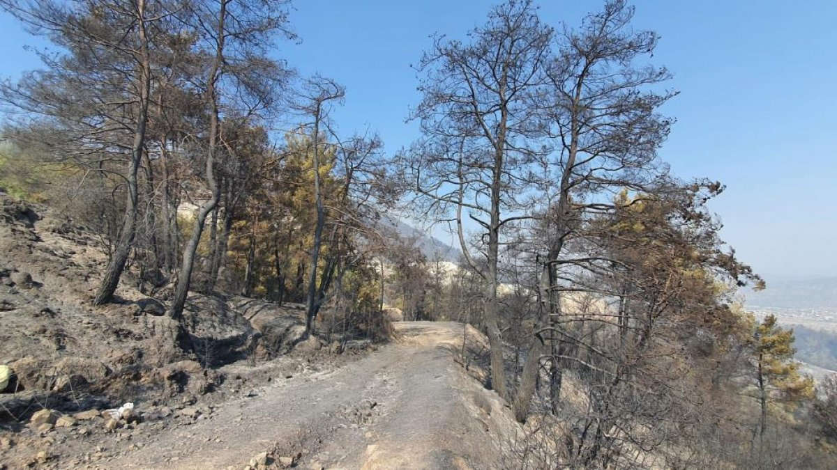 Çine de yanan alanlar görüntülendi  #1
