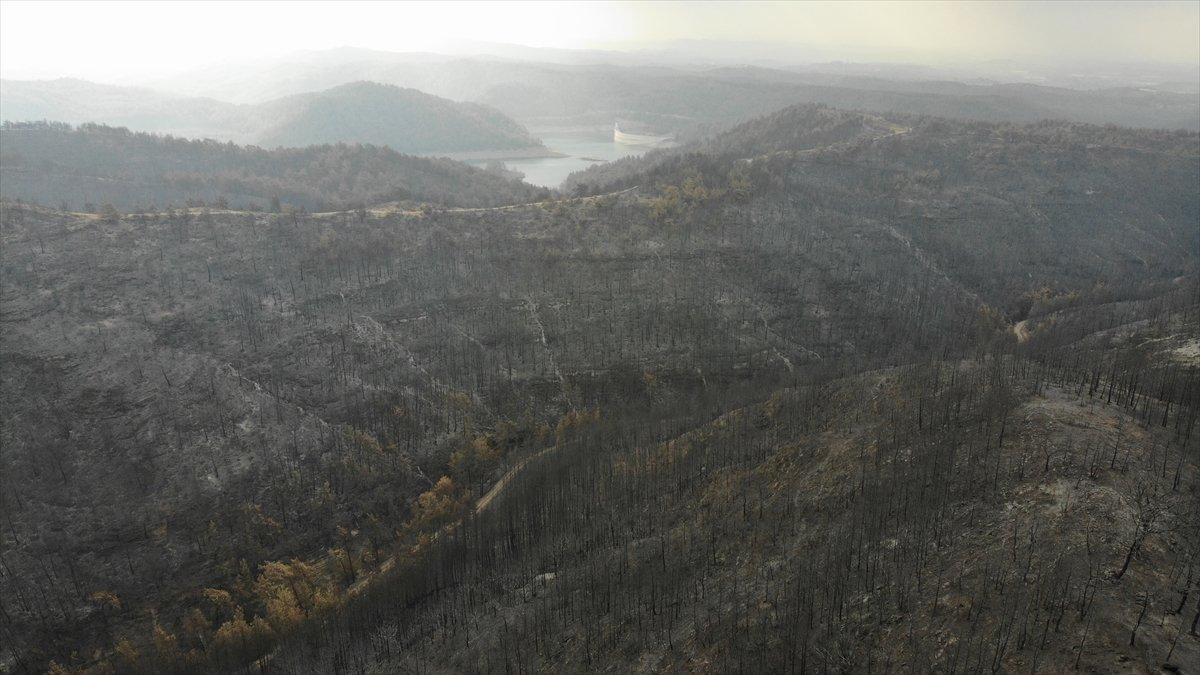 Manavgat yangınında zarar gören alanlar #7