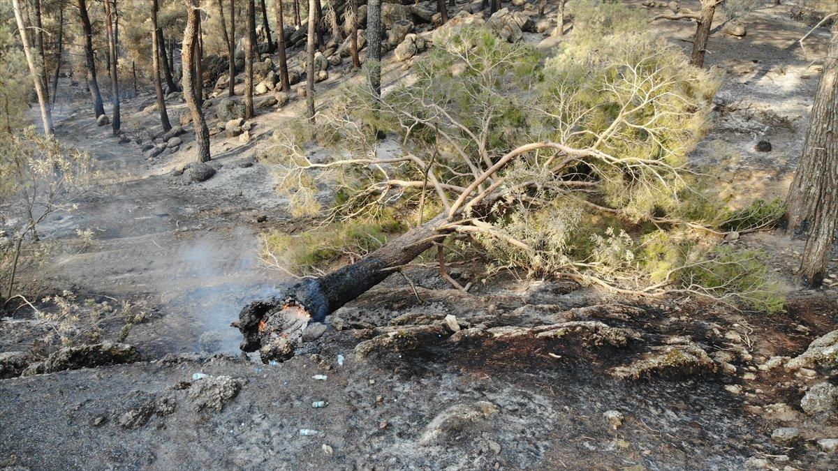 Manavgat yangınında zarar gören alanlar #1
