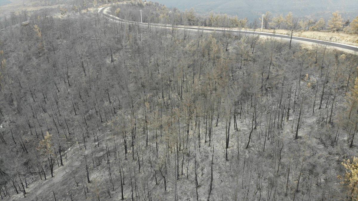 Manavgat yangınında zarar gören alanlar #3