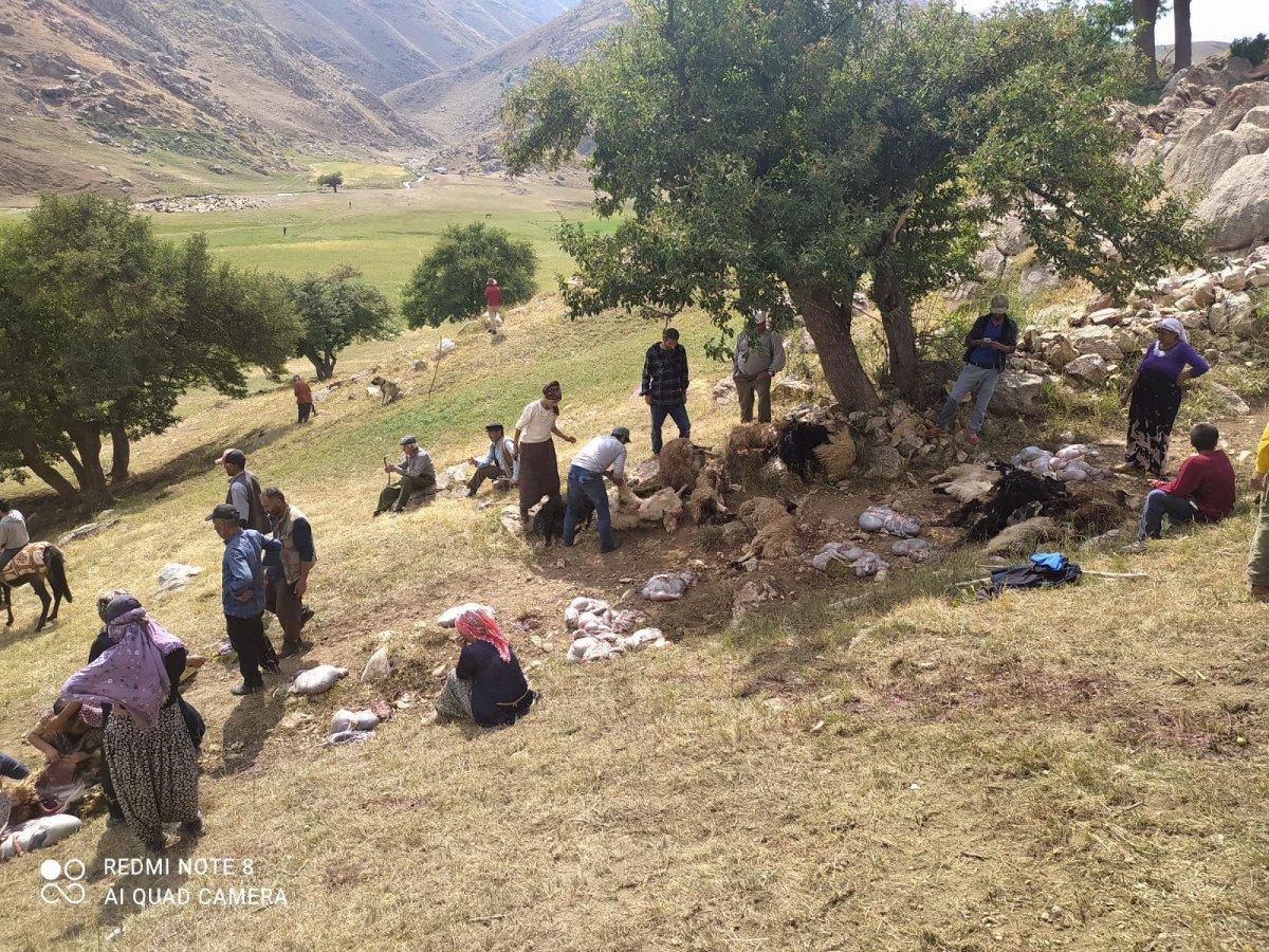 Yüksekova da yıldırım isabet eden 30 koyun öldü #4