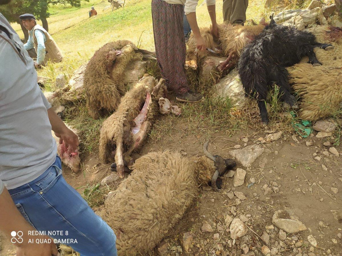 Yüksekova da yıldırım isabet eden 30 koyun öldü #3