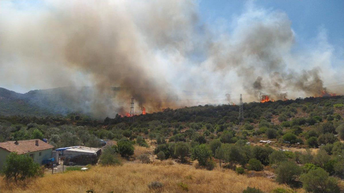 İzmir Urla da orman yangını #1
