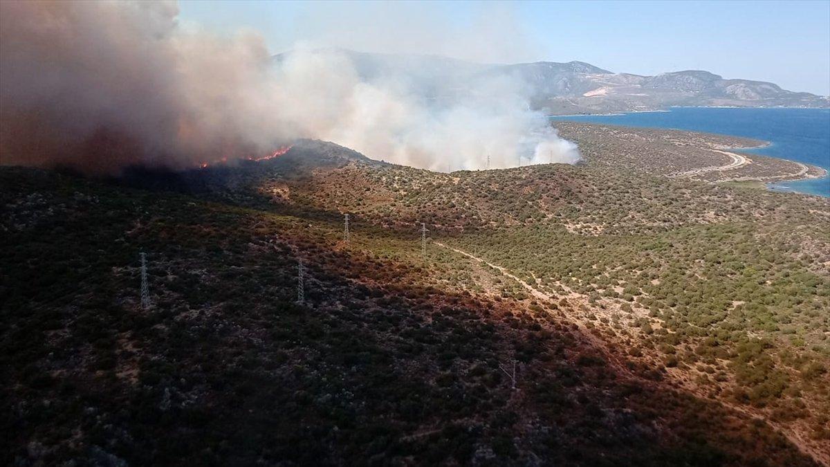 İzmir Urla da orman yangını #2