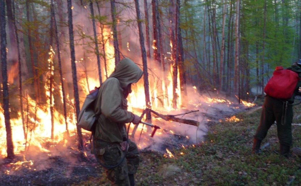 Sibirya daki orman yangınları yerleşim yerlerine ilerliyor #1