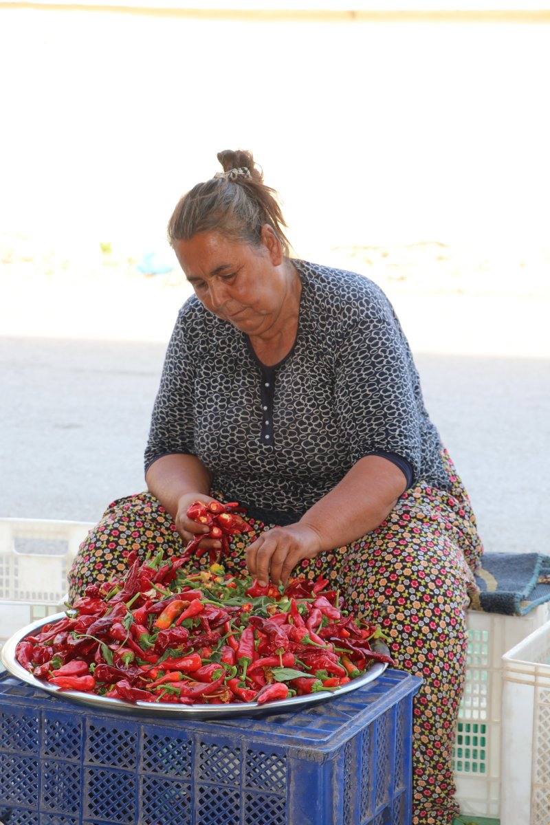 Gaziantep te acı biberin çöpünü temizleyen kadınların mesaisi başladı #1
