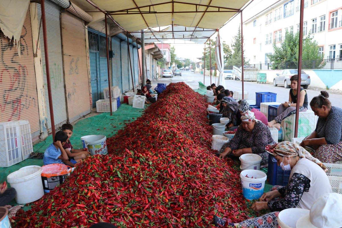 Gaziantep te acı biberin çöpünü temizleyen kadınların mesaisi başladı #3