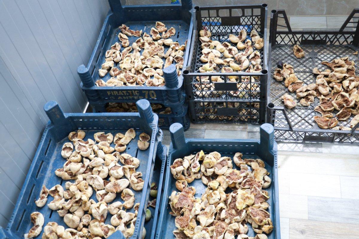 Kahramanmaraş'ın Abbas incirinde hasat dönemi #3