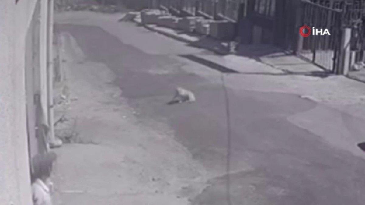 Esenyurt'ta kamyonetin köpeğe çarptığı anlar kamerada  #3